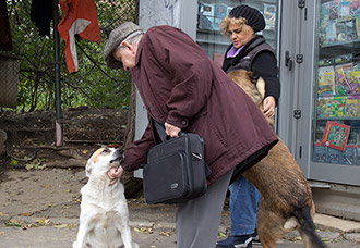 A local man and kiosk owner stop to pet a couple of stray do