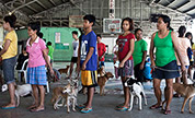 A safe Philippines for dogs