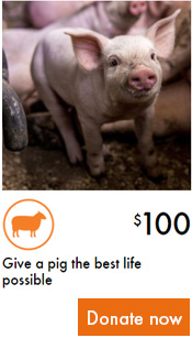 Give a pig the best life possible