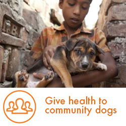 Give health to community-dogs