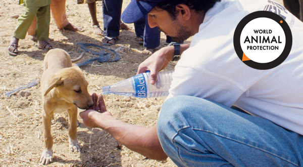 Team member helps a dog affected by earthquake
