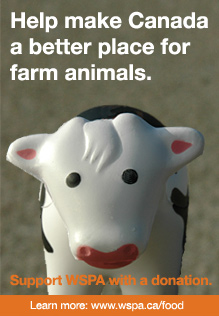 Help make Canada a better place for farm animals. Donate Now